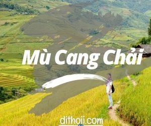 Chen Chen bay trên mùa vàng Mù Cang Chải