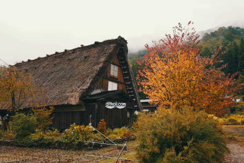 Kinh nghiệm khám phá làng cổ shirakawago