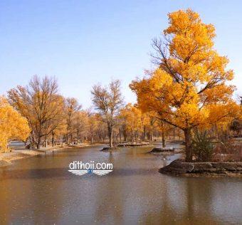 Rừng hồi dương trong truyền thuyết ở Cửu Tuyền